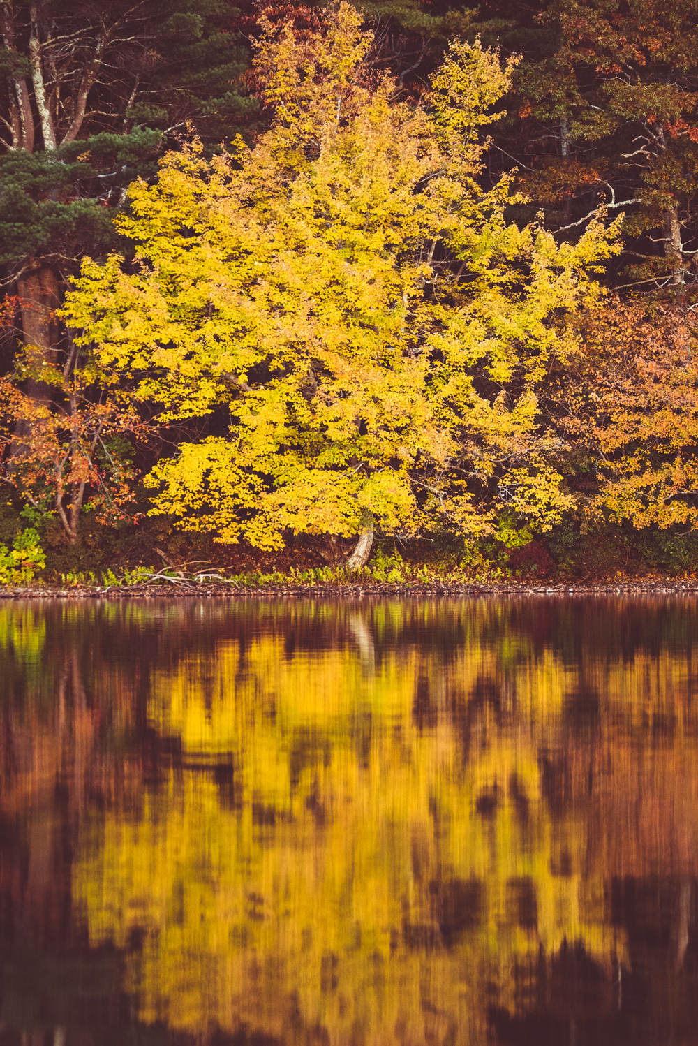 Yellow Fall Foliage