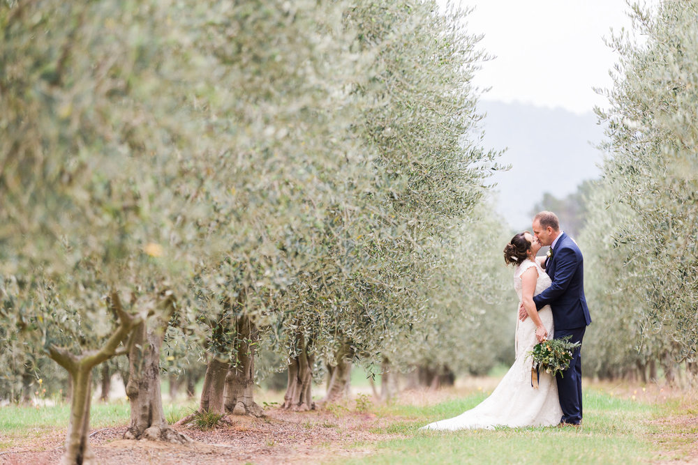Bride and Groom amongst the Olive trees at Pialligo Estate - Canberra Small Weddings