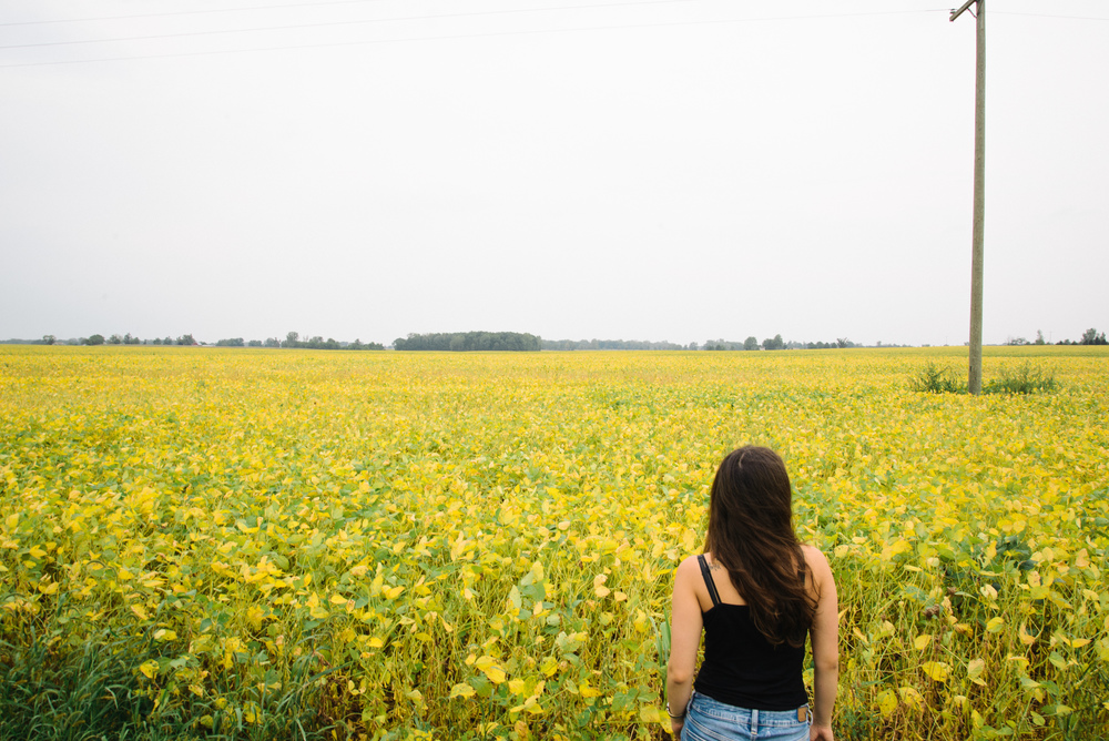 Michigan fields.jpg