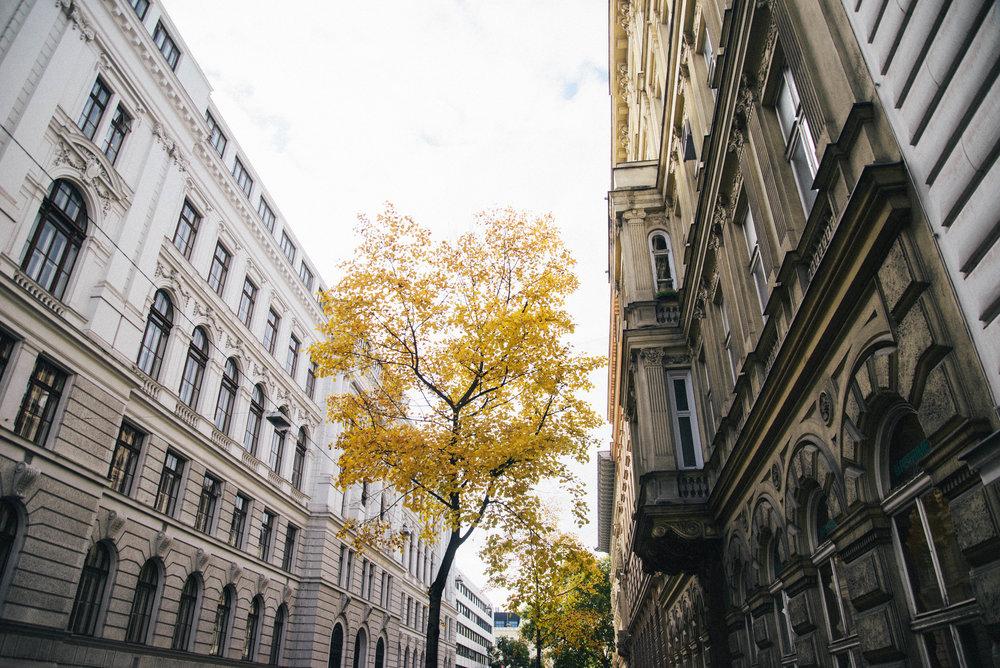 Vienna B-4.jpg