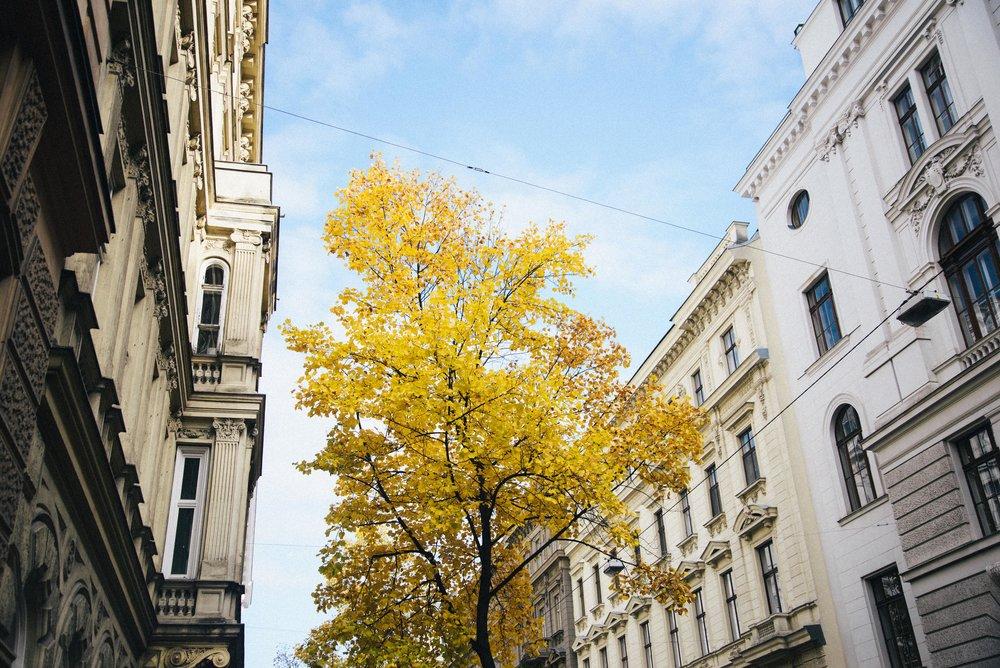 Vienna B-3.jpg
