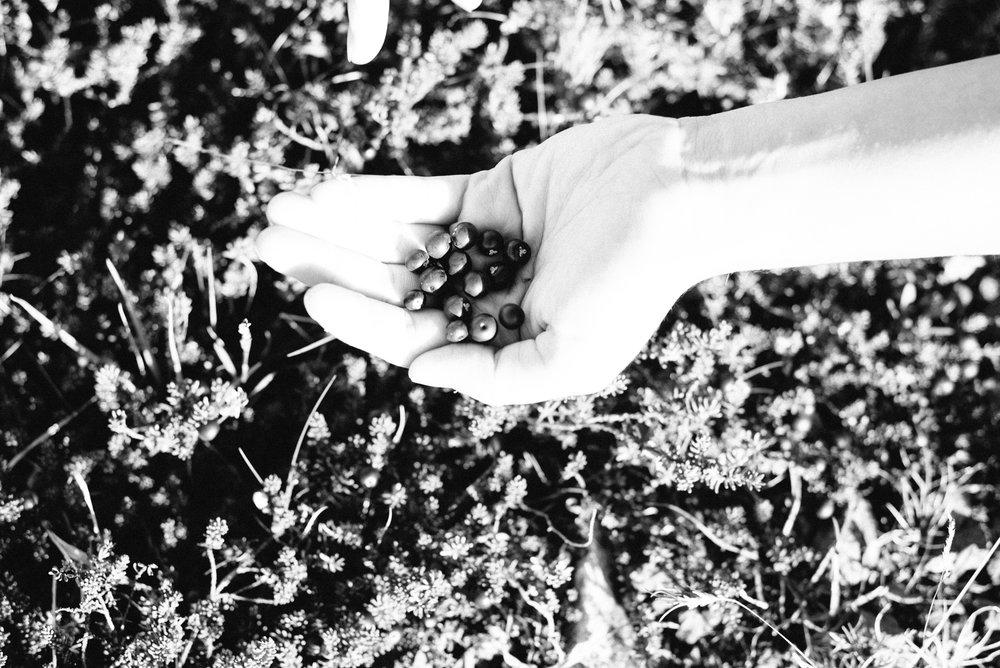 Berry picking-17.jpg