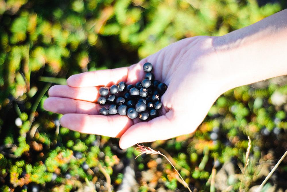 Berry picking-18.jpg