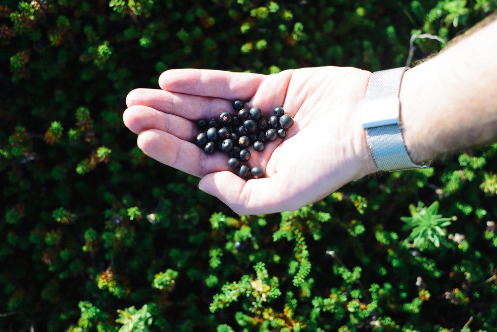 Berry picking-19.jpg