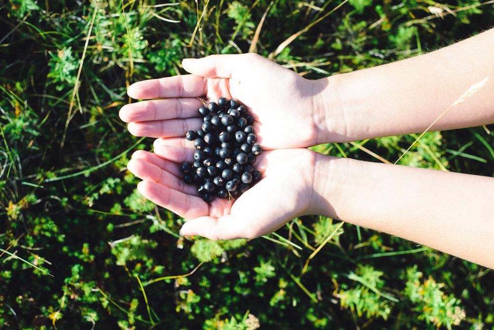 Berry picking-21.jpg