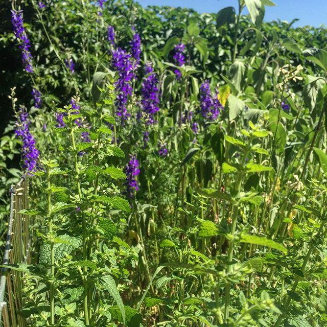 Garden overflow!! We ought to get medicine making