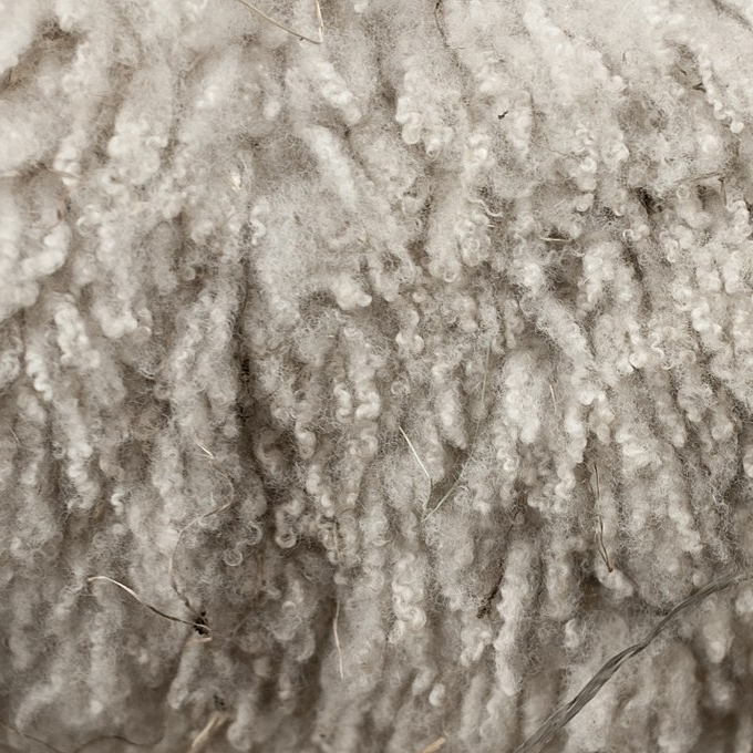 1024px-Royal_Winter_Fair_Wool_2.jpg