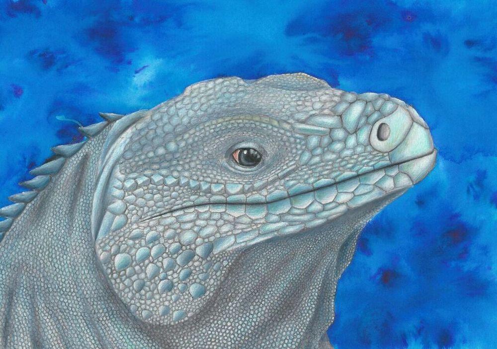 Blue Iguana - Best Animail Portait.jpg
