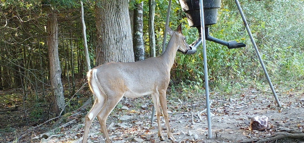 doe_at_feeder1.jpg