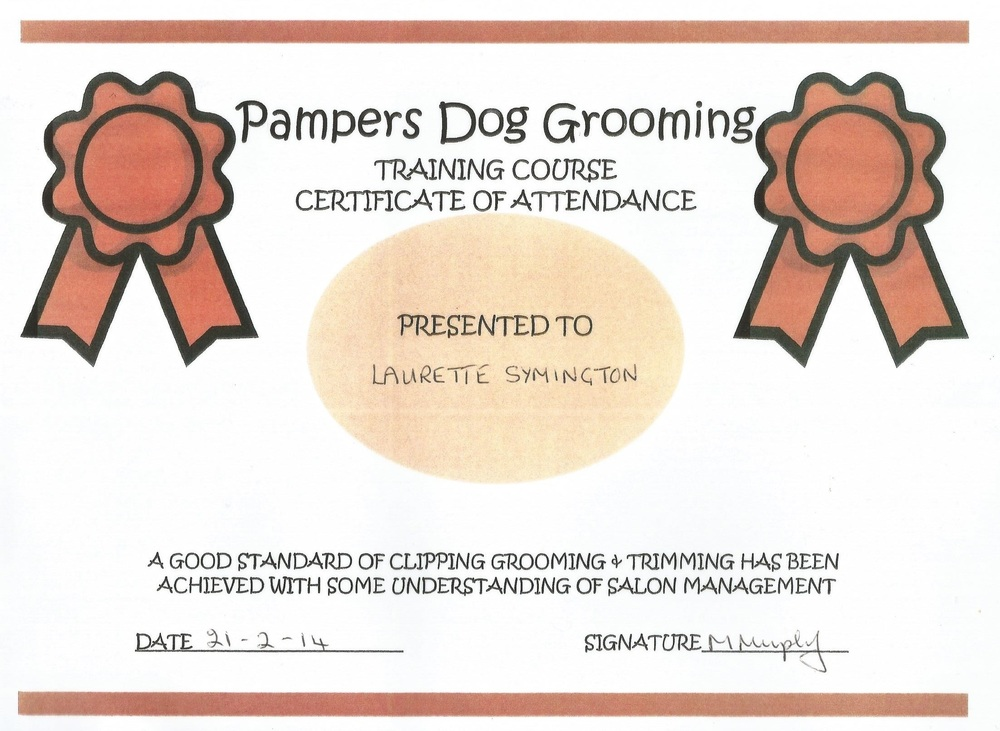 Pampers dog grooming certificate