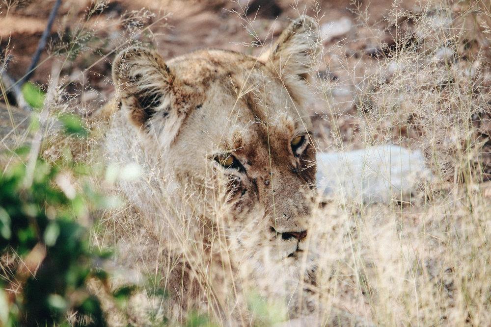 safari-16.jpg