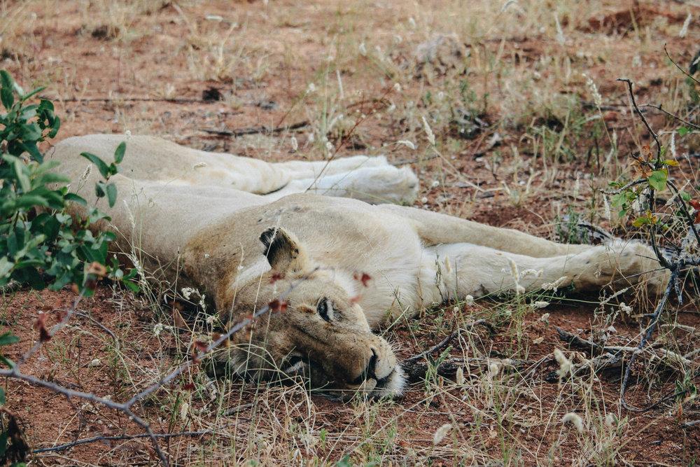 safari-19.jpg