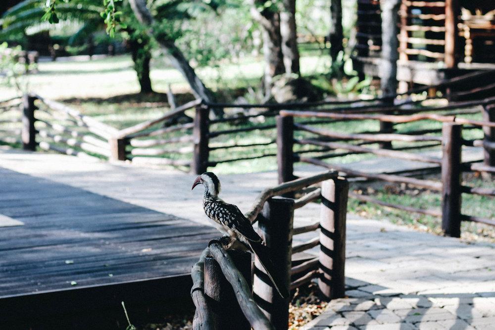 safari-6.jpg