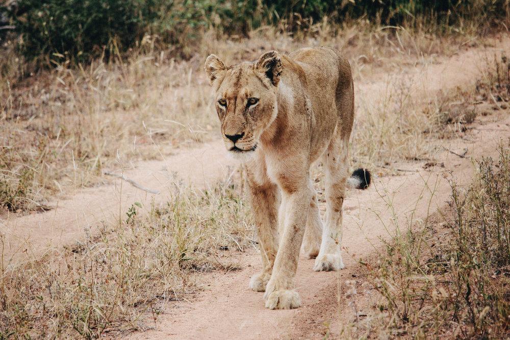 safari-23.jpg