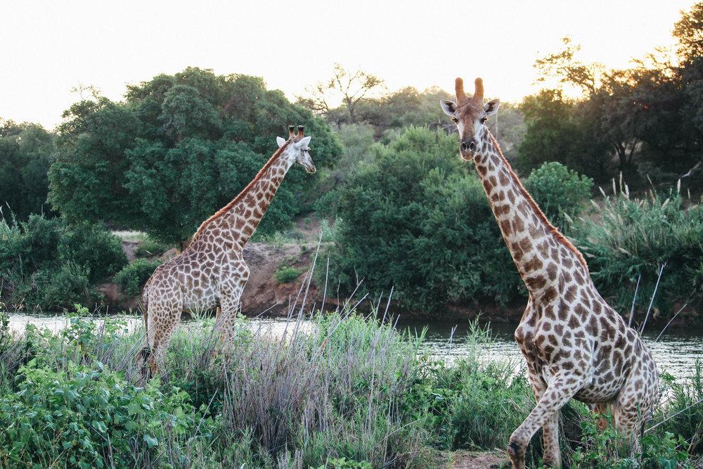 safari-24.jpg