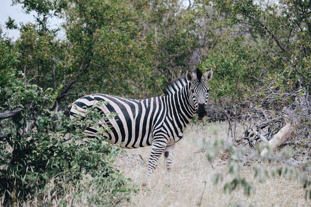 safari-25.jpg