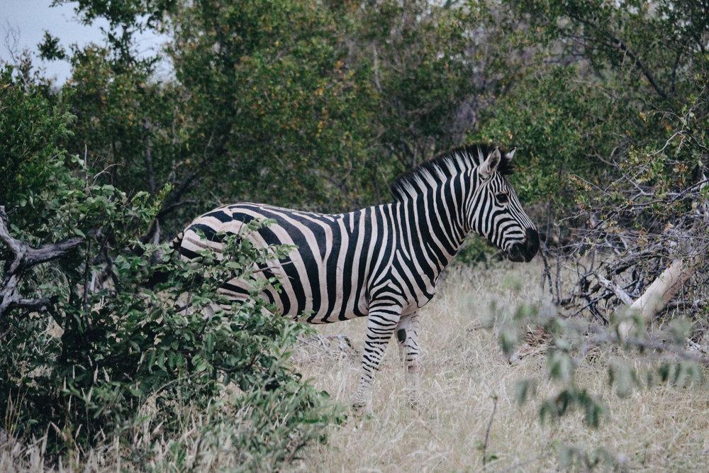safari-29.jpg