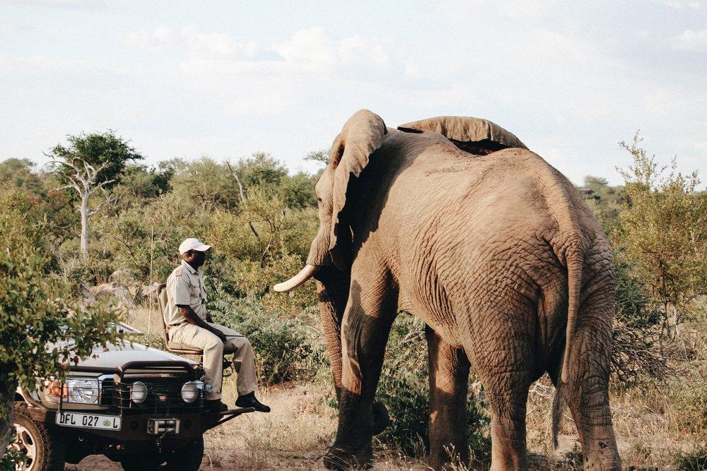 safari-36.jpg