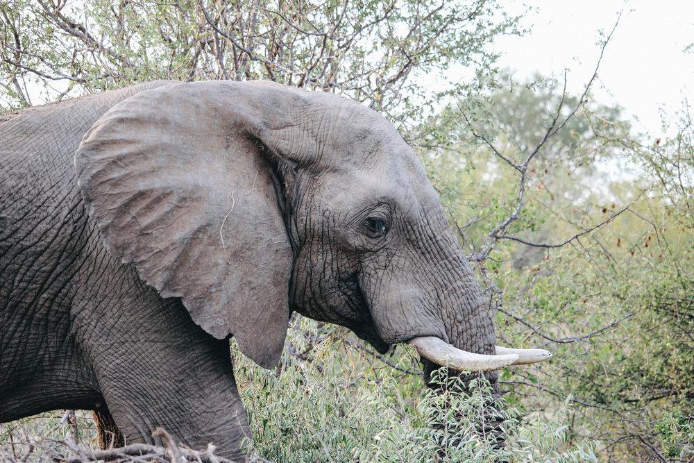 safari-37.jpg