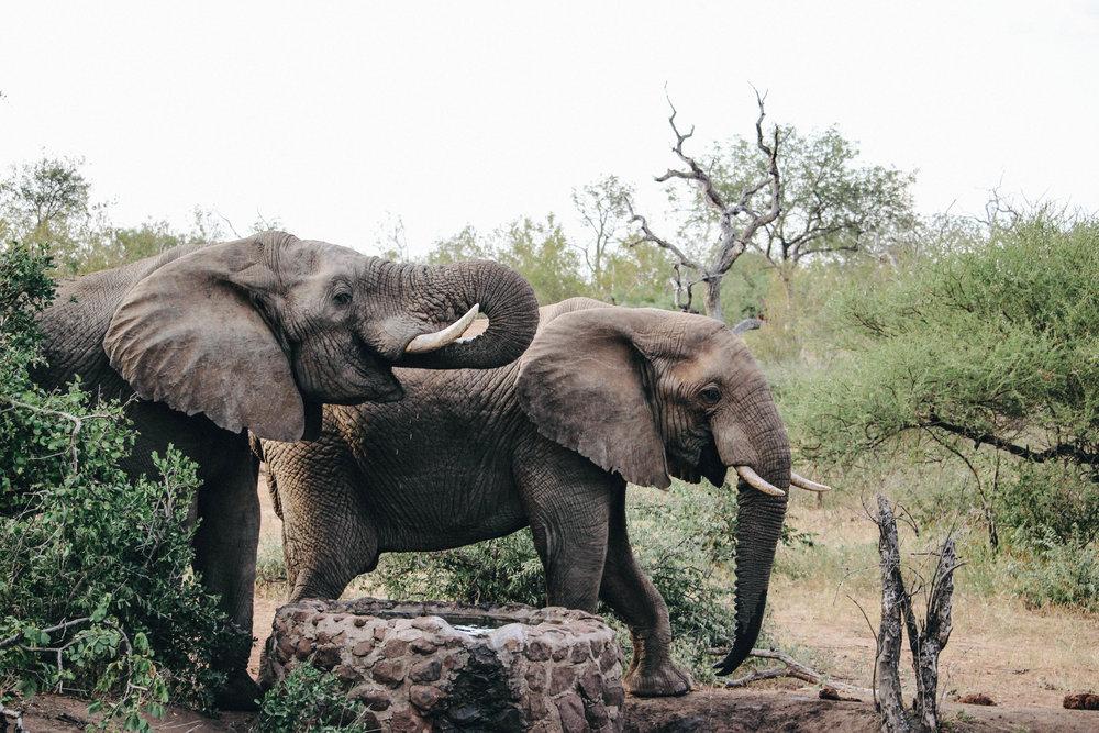 safari-39.jpg
