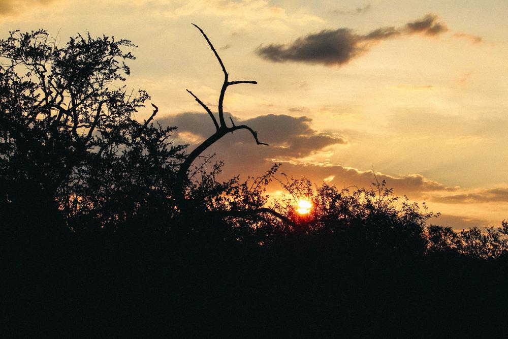 safari-40.jpg
