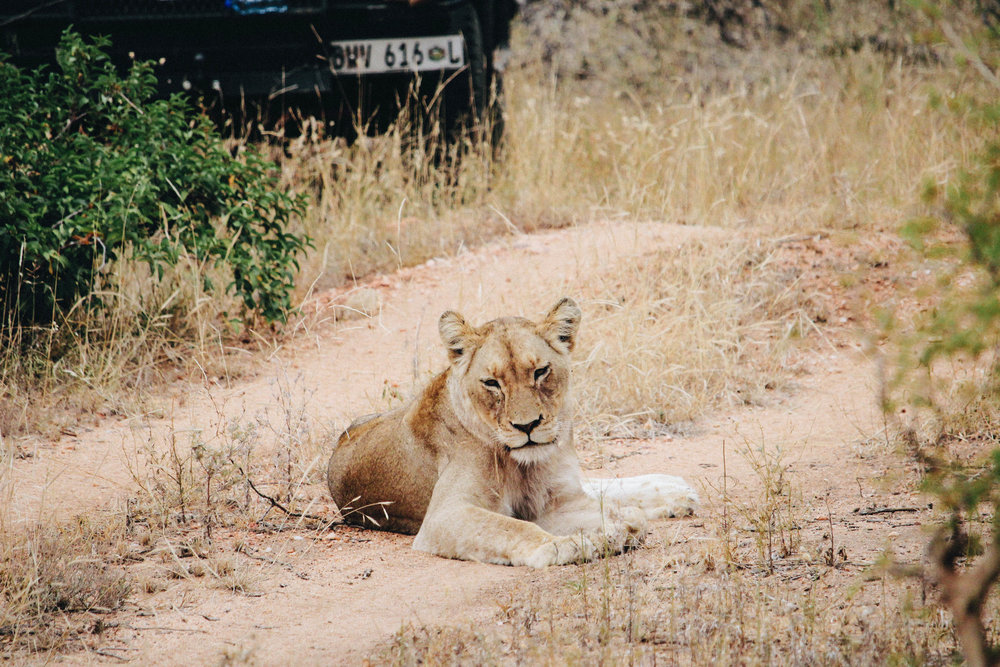 safari-46.jpg