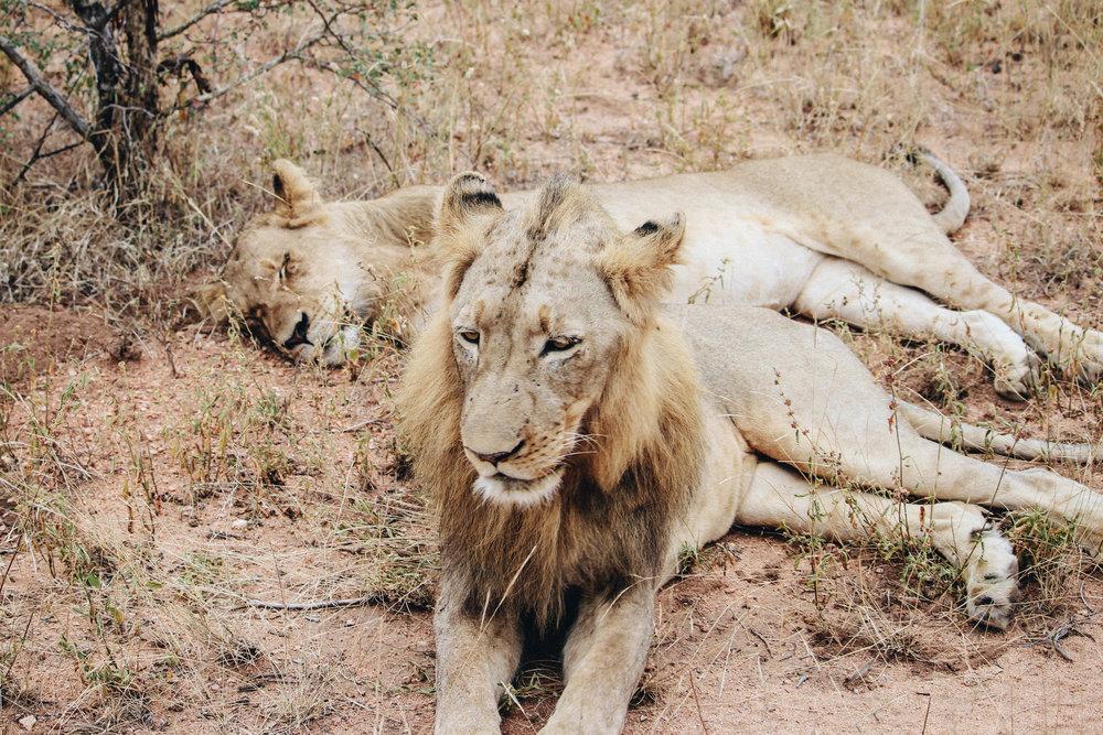 safari-51.jpg
