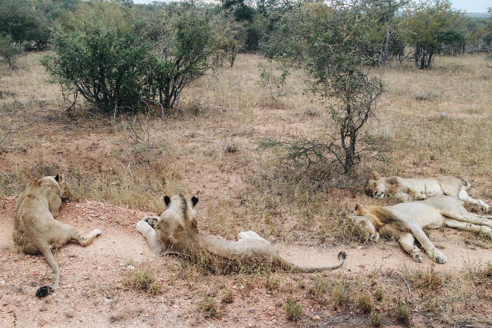 safari-50.jpg