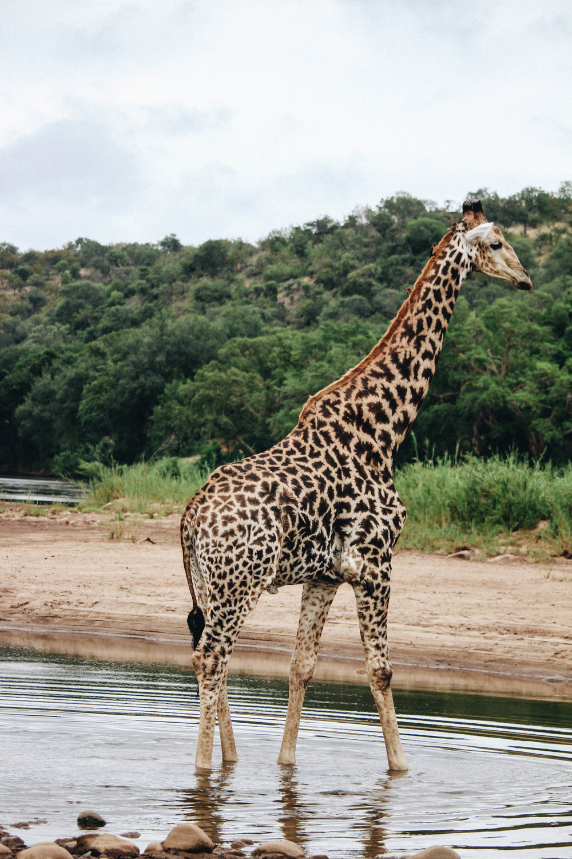 safari-52.jpg