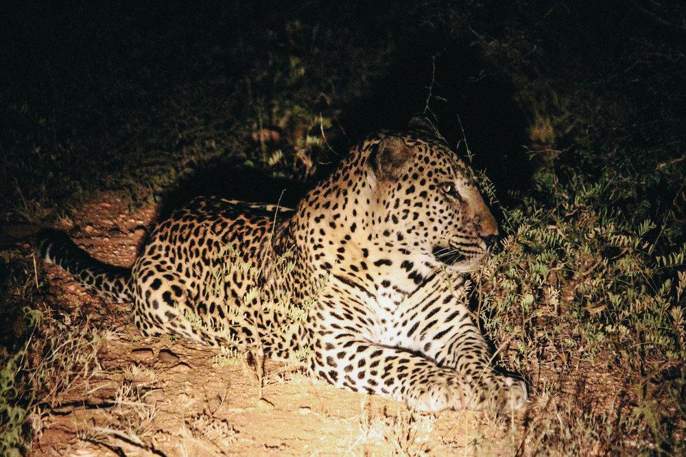 safari-56.jpg