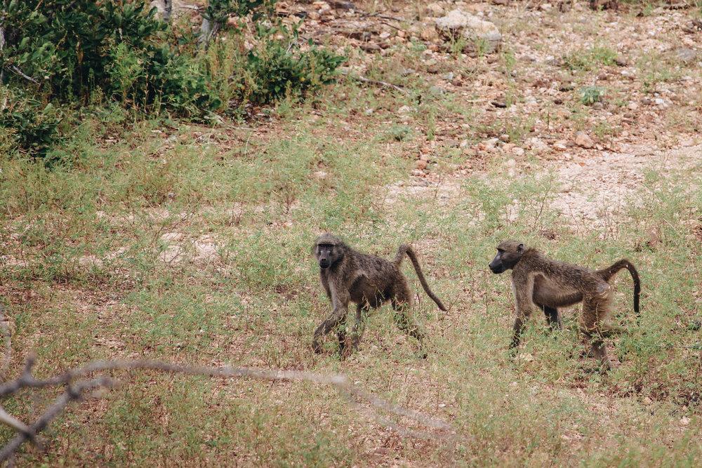 safari-60.jpg