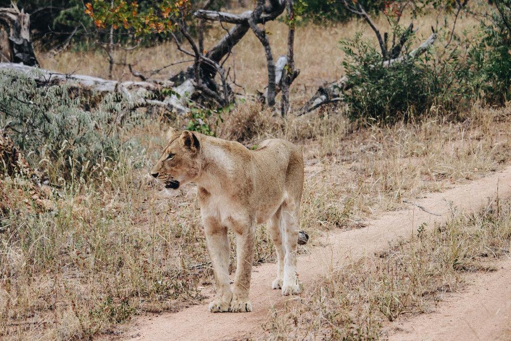safari-61.jpg