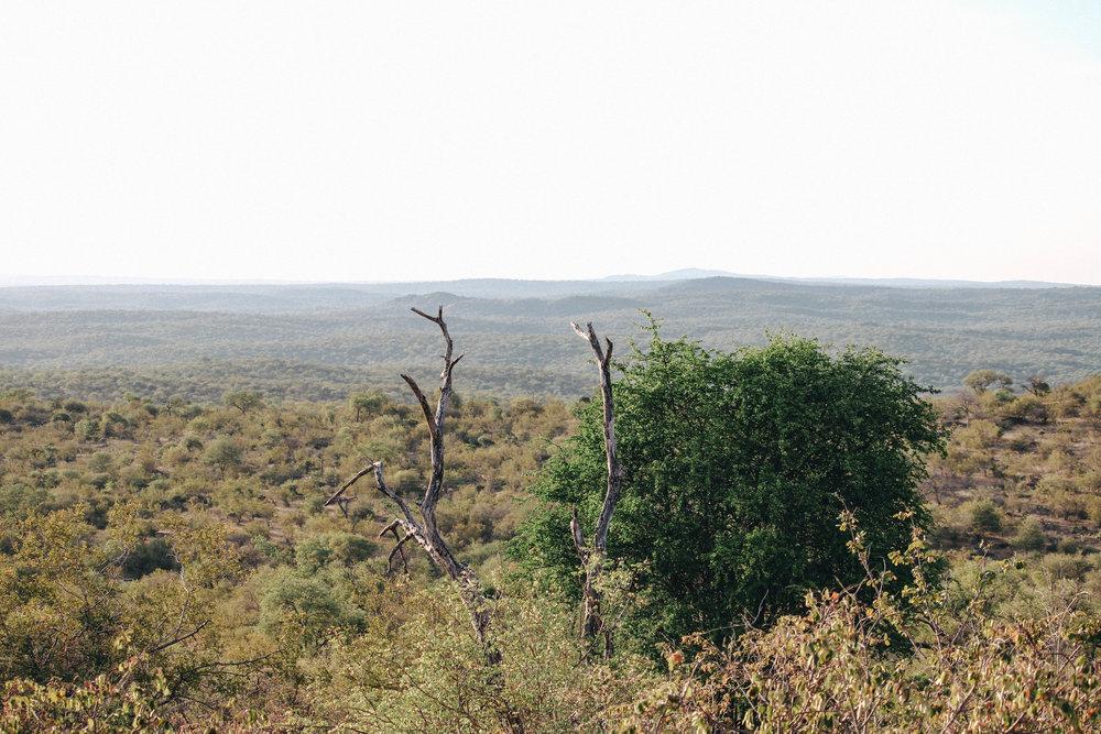 safari-66.jpg