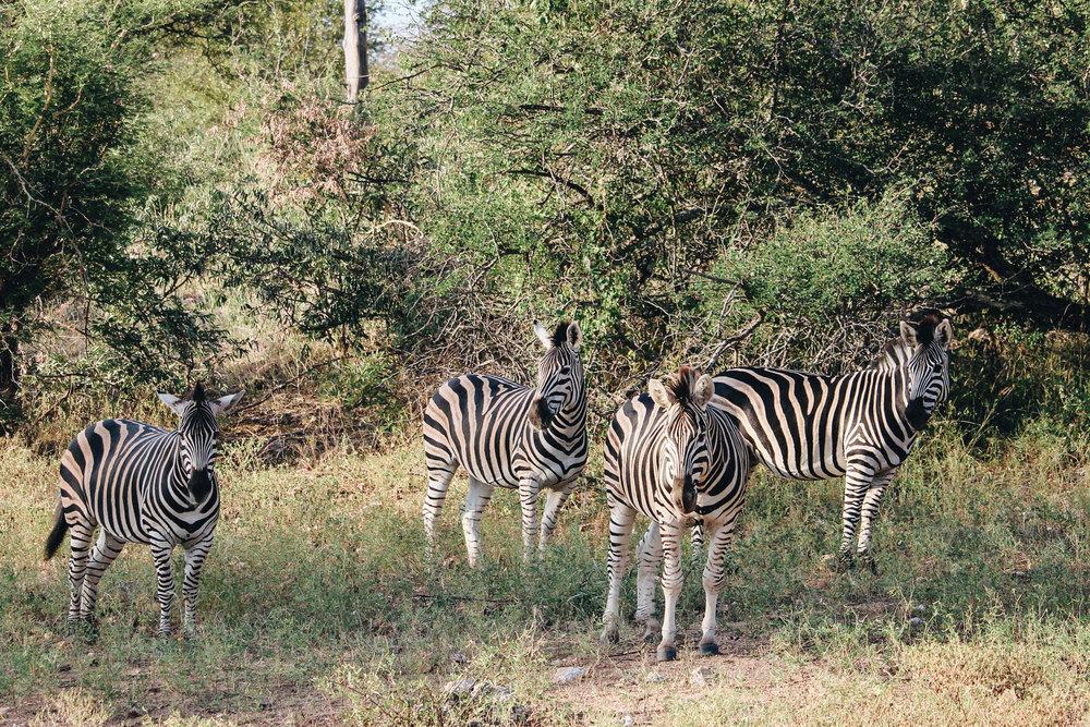 safari-67.jpg