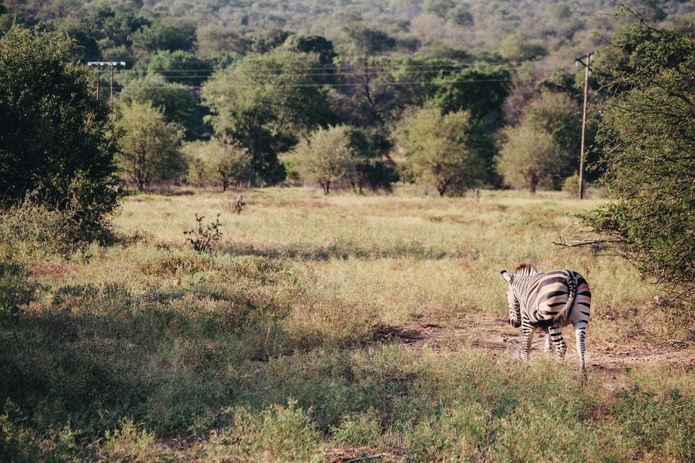 safari-68.jpg