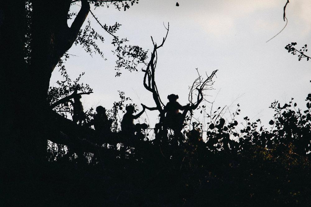safari-69.jpg