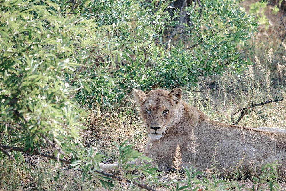 safari-92.jpg