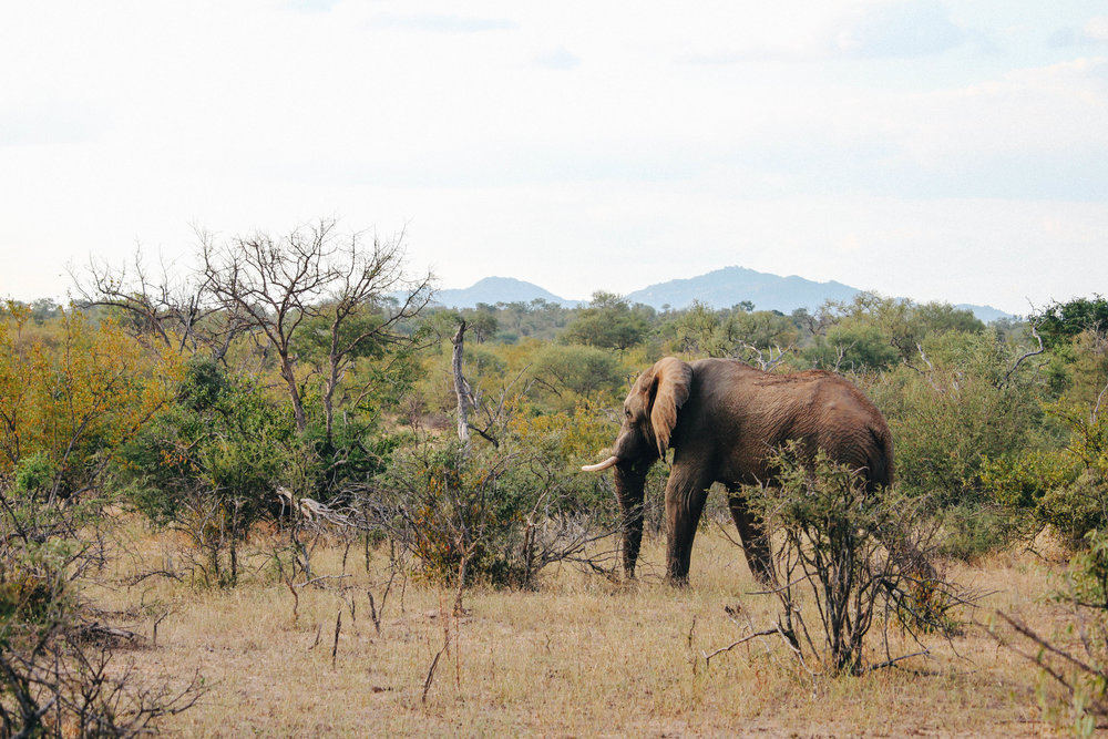 safari-95.jpg