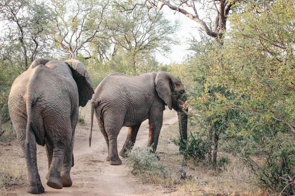 safari-97.jpg