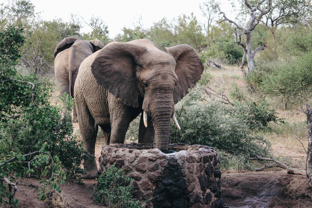 safari-99.jpg
