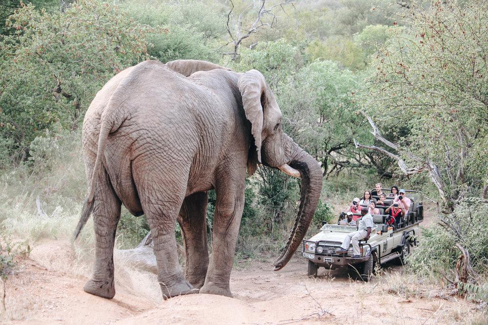 safari-101.jpg