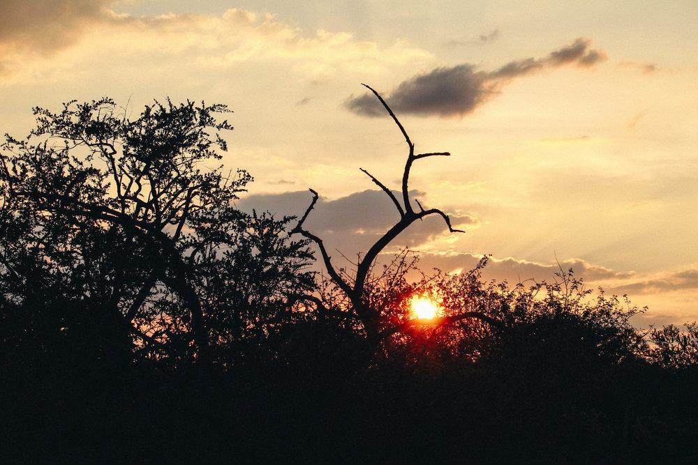 safari-102.jpg