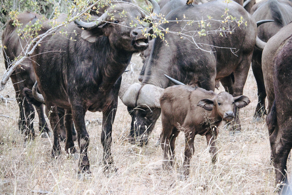 safari-104.jpg