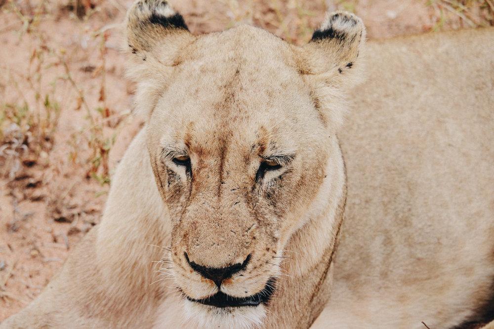 safari-105.jpg