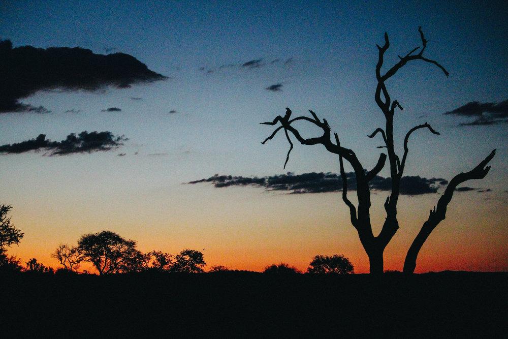 safari-118.jpg