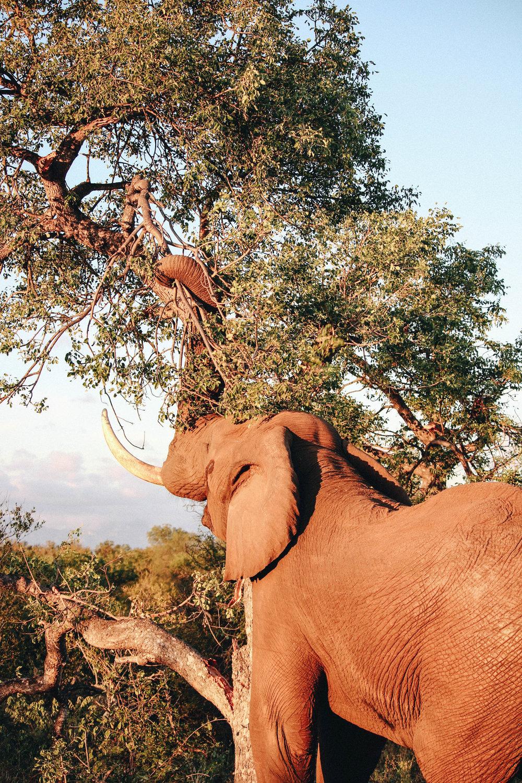 safari-123.jpg