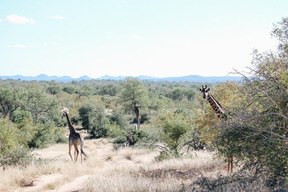 safari-129.jpg