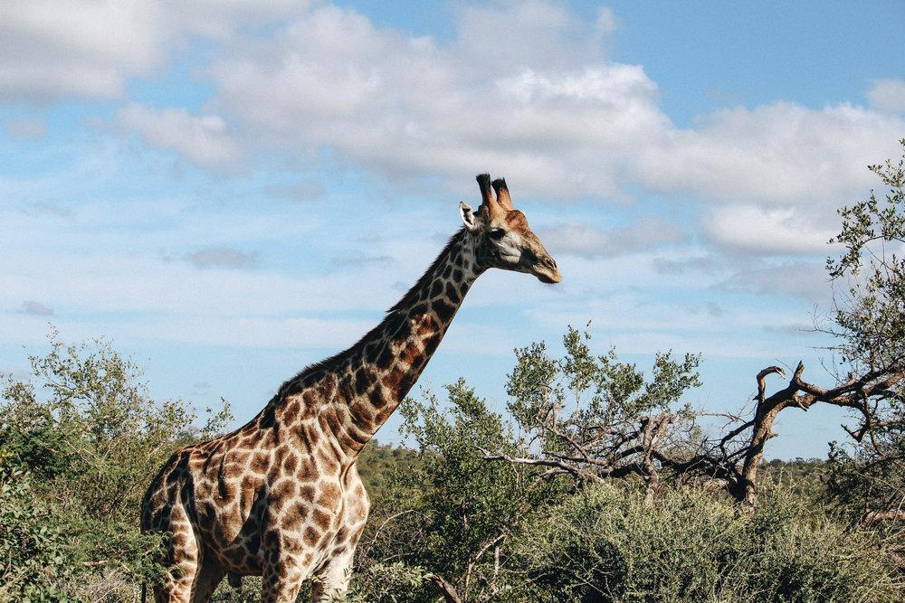 safari-131.jpg