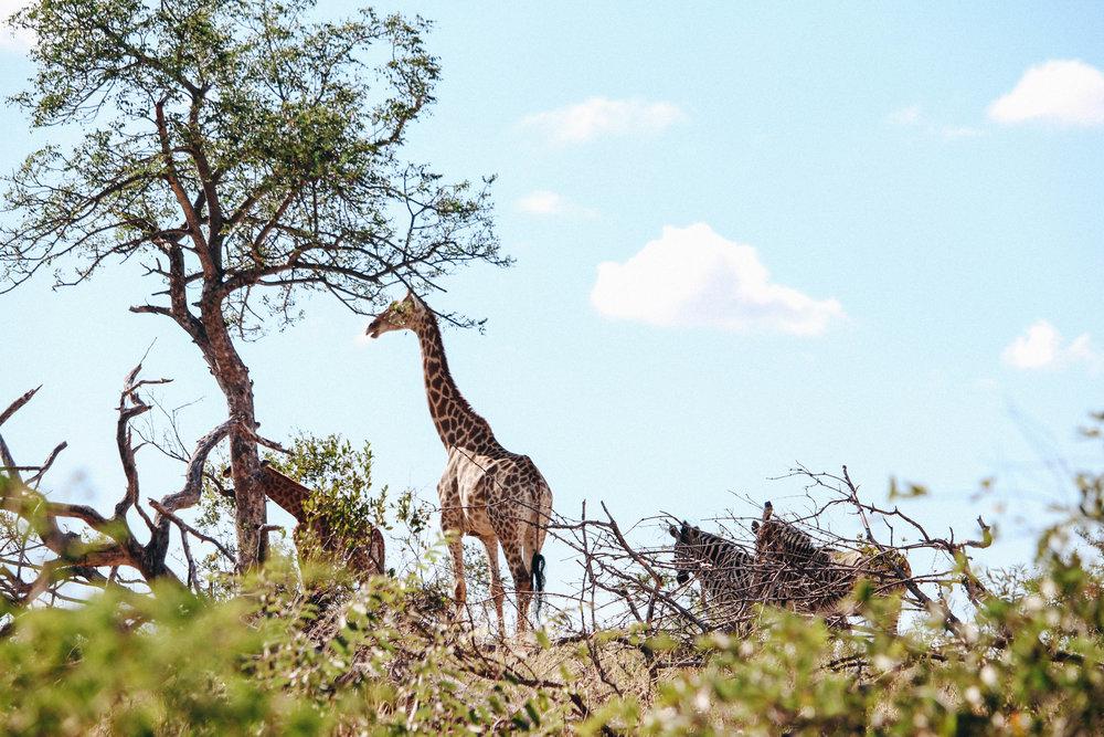safari-132.jpg