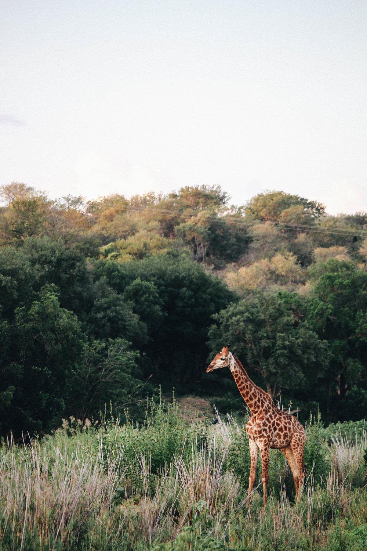 safari-75.jpg